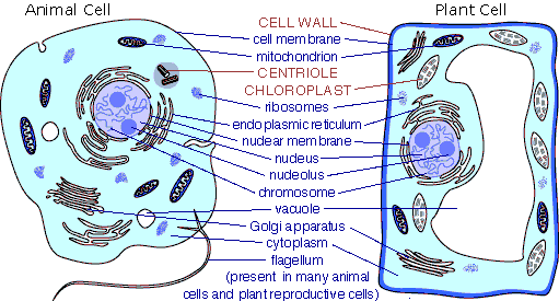 cellbiology_celldifference2