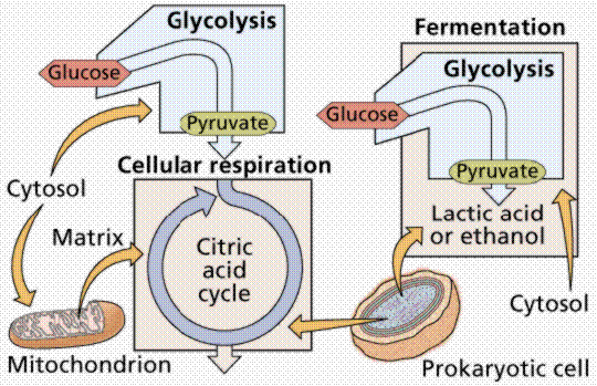 cellbiologyphotosynthesis3