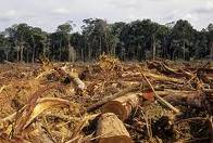 deforestation-1