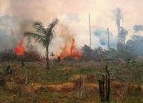 deforestation-3