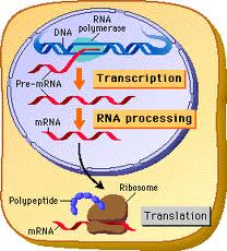 dna_b_function-2