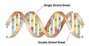 dna_recombination-4