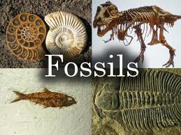 evolutionfossils2