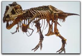 evolutionfossils3