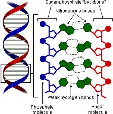 whats_dna-2