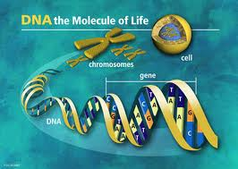 whats_dna-3